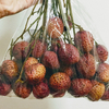 よく食べる果物