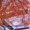 スタバがあれば:太閤山ランドの展望塔