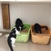 【猫どもプレイバック】モン父セレクション③、黒猫キミがみせる「粋」