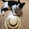 【猫ボール】猫用の知育おもちゃがかなり当たりだった話
