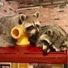 弘大 まるで動物園なアニマルカフェ