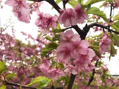 代々木公園ランニング〜春めいてランニング日和〜