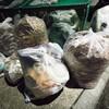 バリ島でゴミ問題が深刻!?人気のビーチも「ごみ緊急事態」?