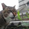 6月後半の #ねこ #cat #猫 その2