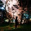 桜と夜と雨と女性と