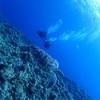 魅惑の慶良間諸島 ダイビング備忘録