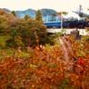 秋のSL・DL大樹を撮る