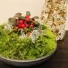 """今年のクリスマス&正月飾りは""""苔""""の寄せ植えで"""