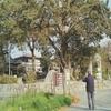 【令和!坂本八幡宮】訪問してきました!新元号「令和」にゆかりのある福岡県・太宰府市の神社