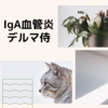IgA血管炎のプラスアルファ DIFと血液検査