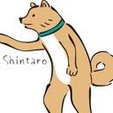 柴犬の新太郎