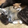 【猫ニュース】犬ちゃん・猫ちゃん達にマイクロチップ?