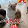 【猫日和】一歳になりました