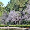 『秋の桜』は少し寂しい🌸