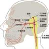 顔面の感覚障害の分布とその障害部位について
