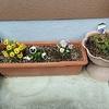 庭に春の花を植えて、ガーデニングを楽しむ