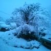 雪が!アクティブダブルステンレス!