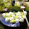 【京都】長岡京市、『柳谷観音』に行ってきました。 京都観光 そうだ京都行こう 花手水