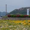 【14~22日目】愛媛県佐島での暮らしは、自由でのびのびとしていた!