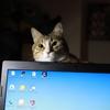 猫は温かい場所を探すのが上手い。