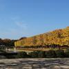 錦秋の昭和記念公園