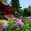 梅雨の晴れ間に・関東ふれあいの道で紫陽花とふれあいに行く @雨引山・御嶽山