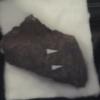 卵殻化石、世界に羽ばたく