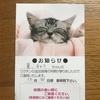 猫達の予防接種*夏の鼻のぶつぶつ