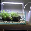 30cmロータイプ水槽に侘び草を置いただけのレイアウトを作りました