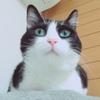★699鐘目『紀平梨花さんと宇多田ヒカルさんに共通点が生まれた1日でしょうの巻』【エムPのイケてる大人計画】