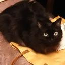 みやびの猫と建物ほぼ毎日日記