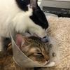 【猫画像】仲良し猫姉妹が相変わらず毎日大暴れしている件