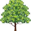 五行の木の陽(甲)と木の陰(乙)について書いてみました