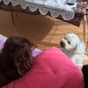 【随時更新】愛犬タンタンとライのご紹介