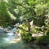 コオニヤンマ  山奥の小さな川