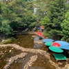 【タイの珍スポット】川の中で食事?カオヤイの足湯レストラン!?