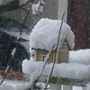 3月も半ばに大雪😱