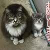 子猫を託しに来た因縁の母猫 気になる「母猫のその後」と保護された「子猫の成長」