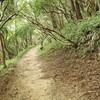 太陽と緑の道コース№5(有馬~魚屋道~六甲最高峰)を歩く