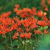 晩夏に咲く花 探訪