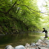 自宅付近の渓流を探索