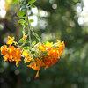 清水公園 花ファンタジアに行ってきました