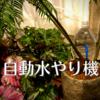 単身赴任と観葉植物。2種類の自動水やり機を買ってみました。家にいなくても水やりができるのか?