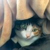 【愛猫日記】毎日アンヌさん#181