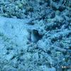 シパダン&マブール島のダイビングで必要なスキル