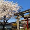 桜満開の東根市の若木山公園と堂ノ前公園