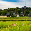 夕日・三重塔・コスモス!奈良最強スポット法起寺とは