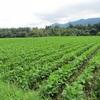 大豆の成長ーゲストハウスの進捗