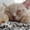 【買って損はない猫グッズ】揃えるべきおすすめグッズ10選&リアルなレビューをご紹介!