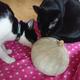 今日の黒猫モモ&白黒猫ナナの動画ー828